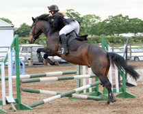 In-house Dressane Clinics at Caistor Equestrian Centre
