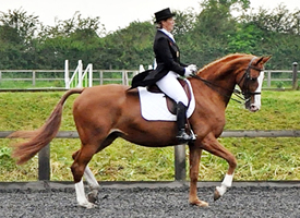 Jane Bartle-Wilson Clinics at Caistor Equestrian Centre