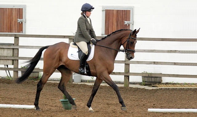 Evening Dressage  at Caistor Equestrian Centre